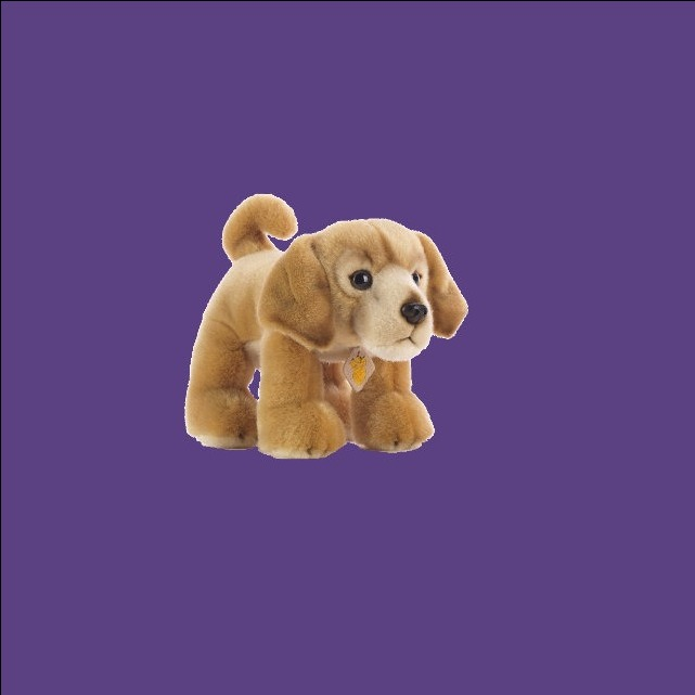 Plush & Company Golden Retriever